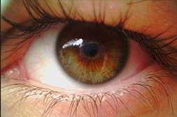 Vizox предупреждает патологию сетчатки