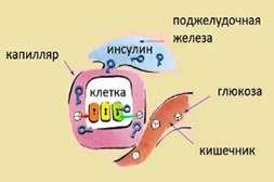 Лекарство Глюкон способствует нормализации переработки сахара на клеточном уровне.