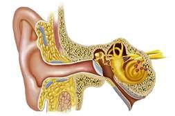 С лекарством Лоропакс поддерживается слух.